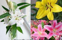 Tìm hiểu ý nghĩa hoa Bách Hợp