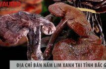 Địa chỉ bán nấm lim xanh uy tín tại tỉnh Bắc Giang