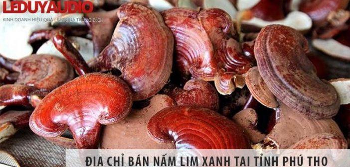 Địa chỉ bán nấm lim xanh uy tín số 1 tại tỉnh Phú Thọ