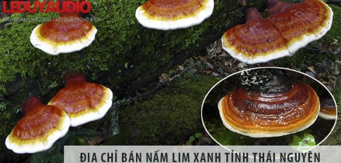 Top 1 địa chỉ bán nấm lim xanh uy tín tại tỉnh Thái Nguyên